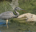 parc-regional-grand-heron