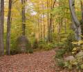 parc-regional-sentier-automne