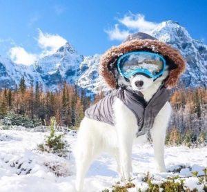 chien-en-hiver-1